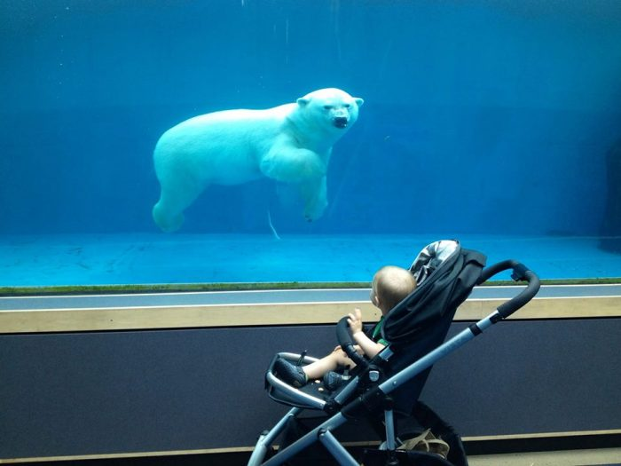 1. Spend the day at the Pittsburgh Zoo & PPG Aquarium.