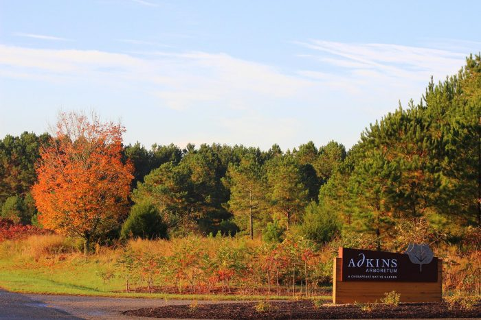 Not a fan of walking around in the sweltering heat? Autumn is also a glorious time to visit the Adkins Arboretum.