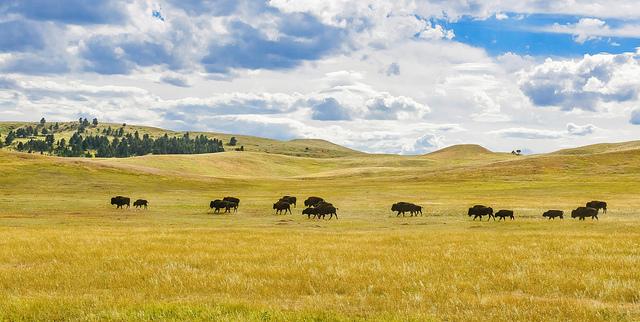 3. Get oustide in the Black Hills.