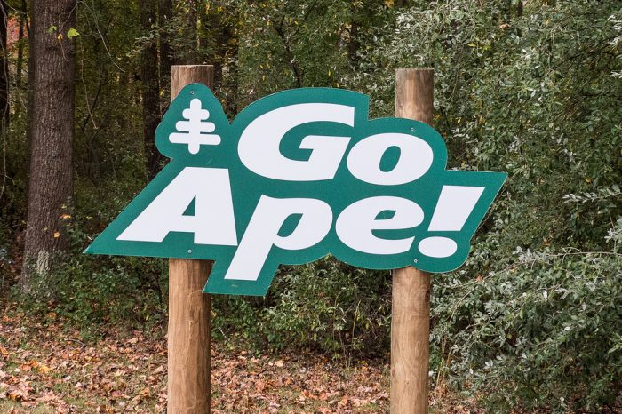 Go Ape! is the only canopy walk in Delaware and one of the best in the entire region