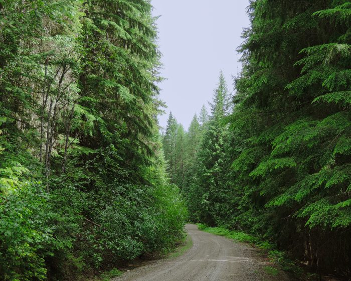 10. A dreamy scene on the road through the Colville National Forest.