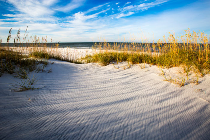 Florida's diverse landscapes are not only beautiful, they're full of educational opportunities. From coastal habitats...