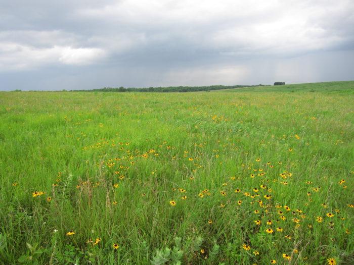 11. Golden Prairie