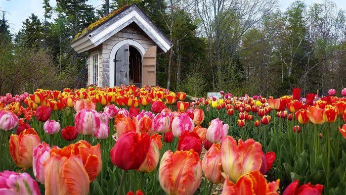 5. A stroll through the Coastal Maine Botanical Gardens in Boothbay.