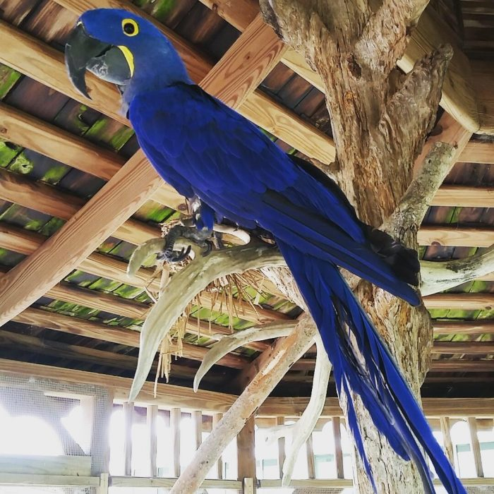 The exotic birds here are sure to entertain you.