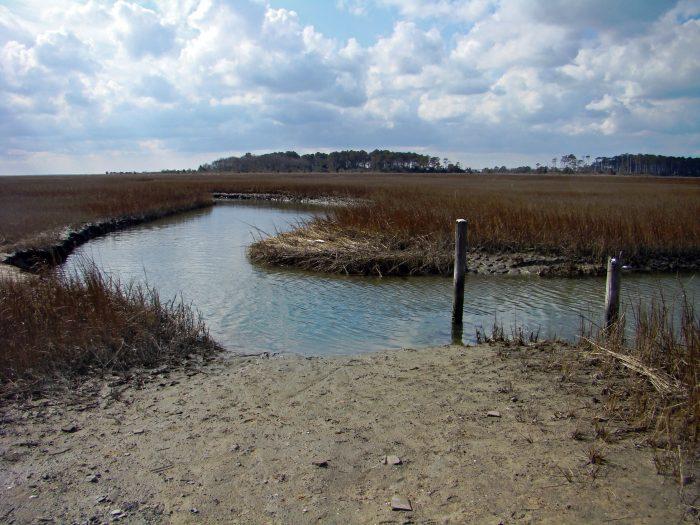 6. The Eastern Shore National Wildlife Refuge