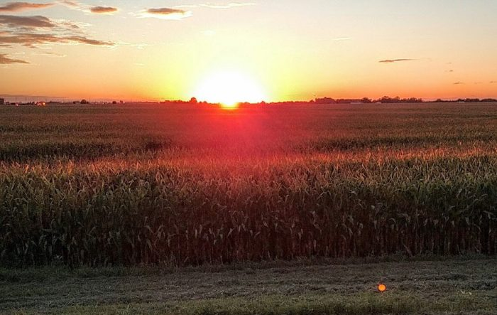 12. This pre-harvest sunset in Willmar is unreal.