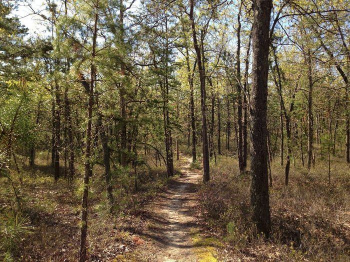 7. BaToNa Trail, Pinelands