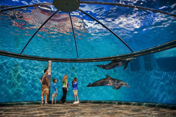 3. Explore the world at the Indianapolis Zoo and White River Gardens.