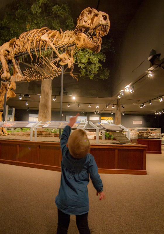 1. Museum of the Rockies in Bozeman