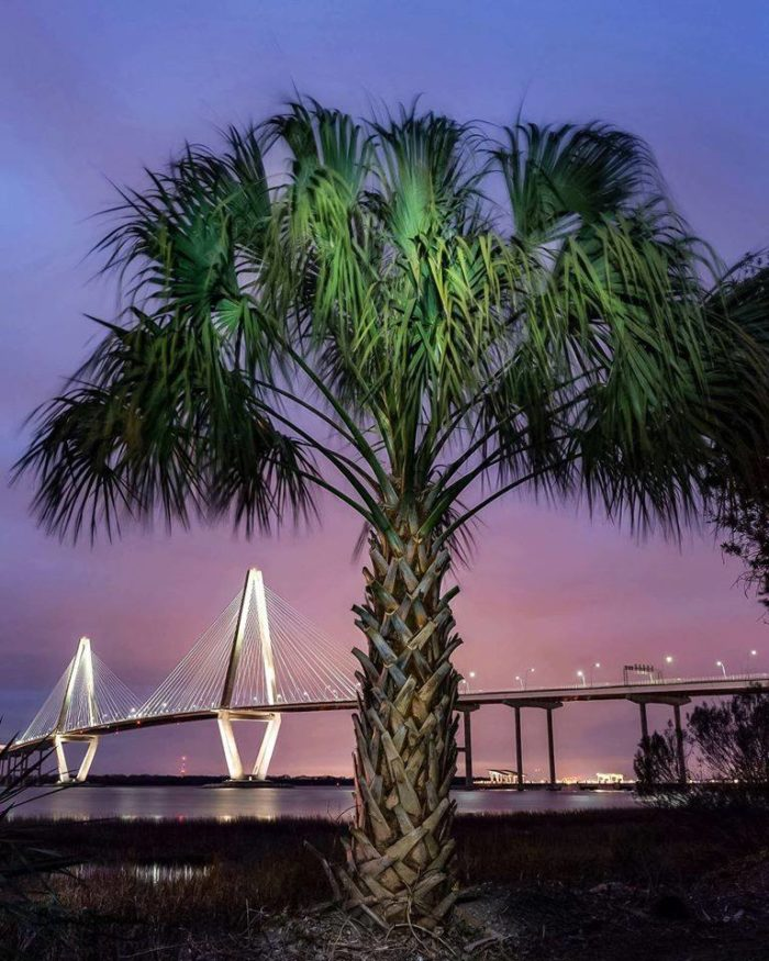 3. A palm tree stands watch near the foot of the Ravenel Bridge in Mount Pleasant.