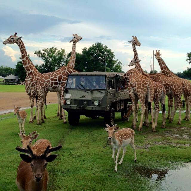 And you never know when a giraffe party is about to start!