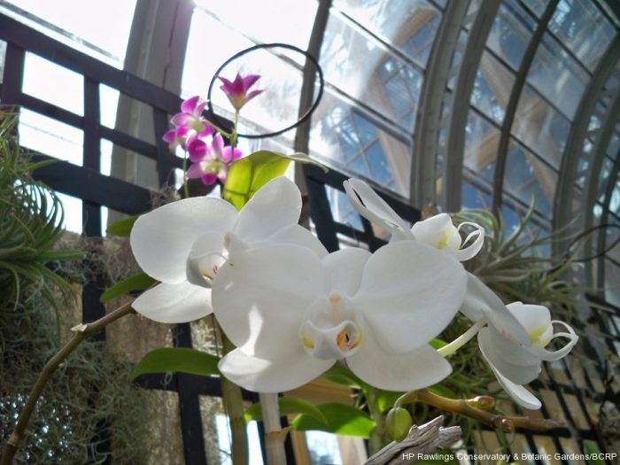Next you'll approach the Orchid Room. This colorful space is filled with a wide variety of orchids that are in peak bloom.