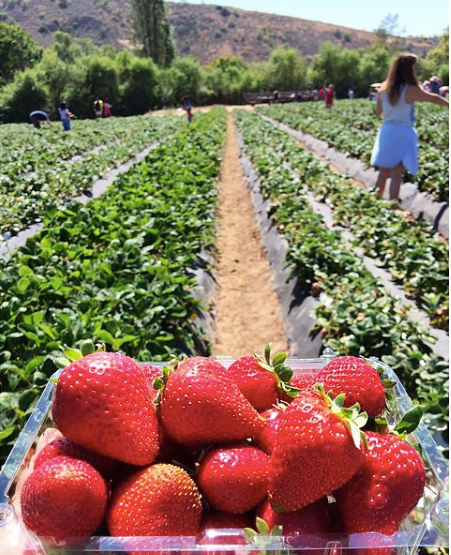 4. California: Tanaka Farms in Irvine practices chemical-free farming. Their berries are some of the juiciest in the region.