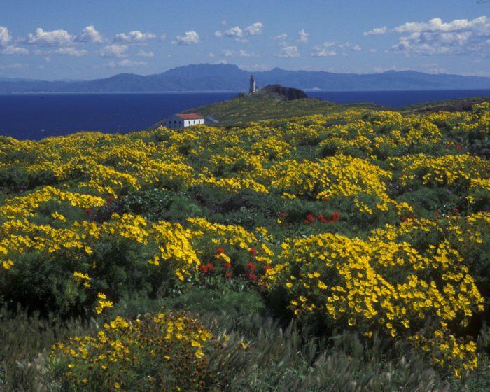 5. Anacapa Island -- Channel Islands National Park