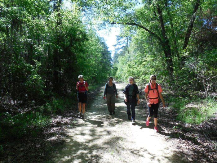 3. Hike the Palmetto Trail.