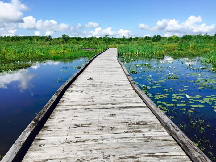 There are 125,511 acres of marsh preserved here, which provides habitat to large numbers of wildlife in the area.