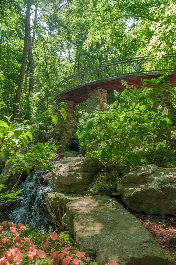 The Millsap Canopy Bridge spans 120 feet and stands two stories above the forest floor. From it you'll see Singing Springs Gorge with its pools, cascades, and beautiful foliage, including rhododendrons donated by the Ozark Chapter of the American Rhododendron Society.