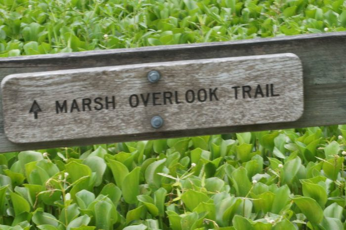 And finally, if you continue along the Palmetto trail, you'll be lead to the Bayou Coquille Trail...