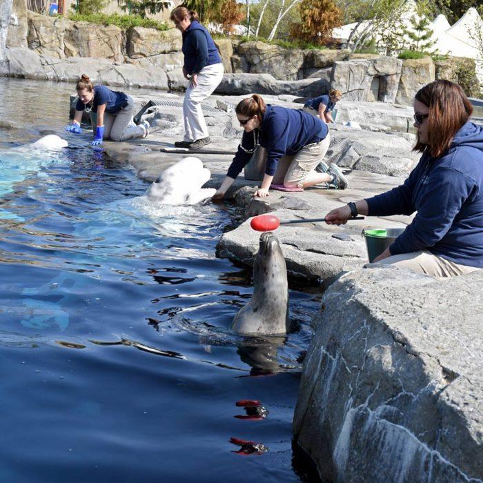 5. Under The Sea: Mystic Aquarium