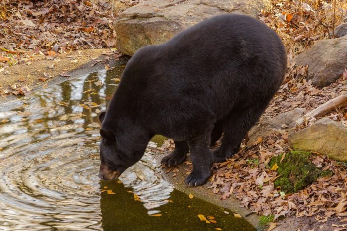 5. Find your 'wild side' at the Bear Hollow Zoo.