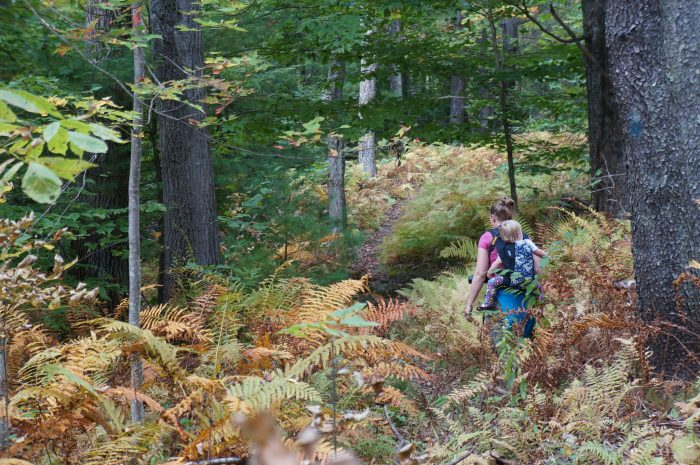 8. Follow the Harrington Trail on Wachusett Mountain in Princeton for an easy, 1.4-mile hike to the summit.