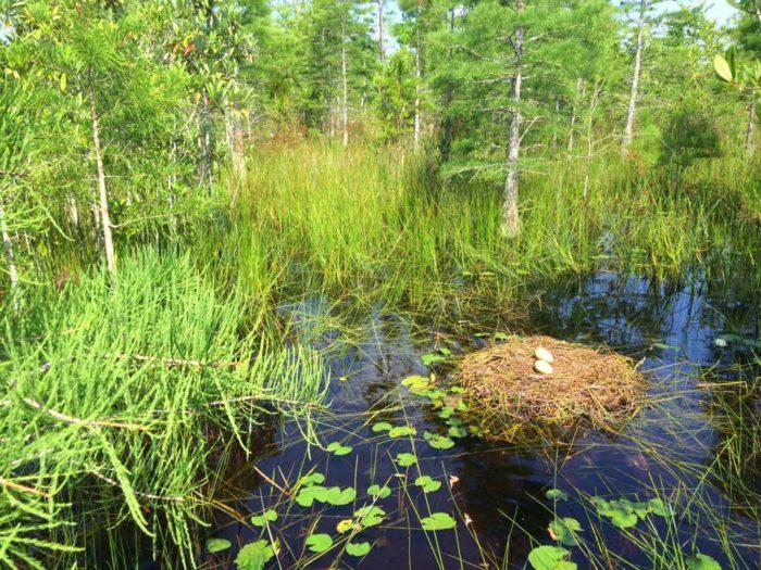 6) Mississippi Sandhill Crane National Wildlife Refuge, Gautier, MS