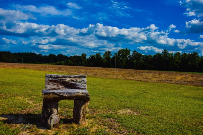 4. A beautiful summer day in Fork, South Carolina.