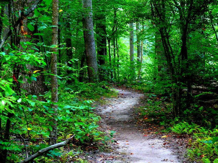 6. This Cedarville State Forest pathway seems to lead to adventure.