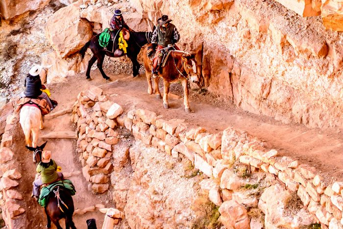 4. Ride a mule in and out of the Grand Canyon.