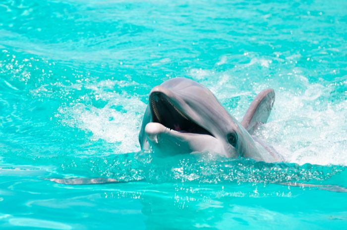 14. It is against the law to display captive dolphins and whales.