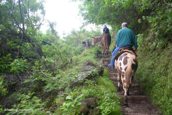 14. Take a mule ride to Kalaupapa National Historical Park.