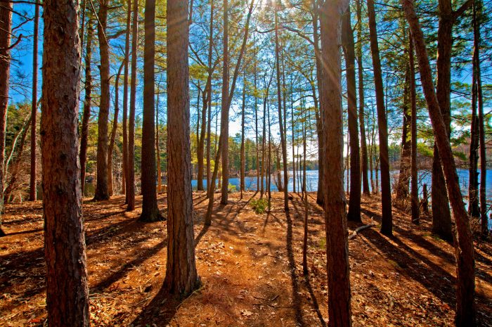 6. The Hiking & Bridle Trail at Harold Parker State Forest, North Andover is the perfect trail for all seasons. The trail passes plenty of spots to fish and swim.