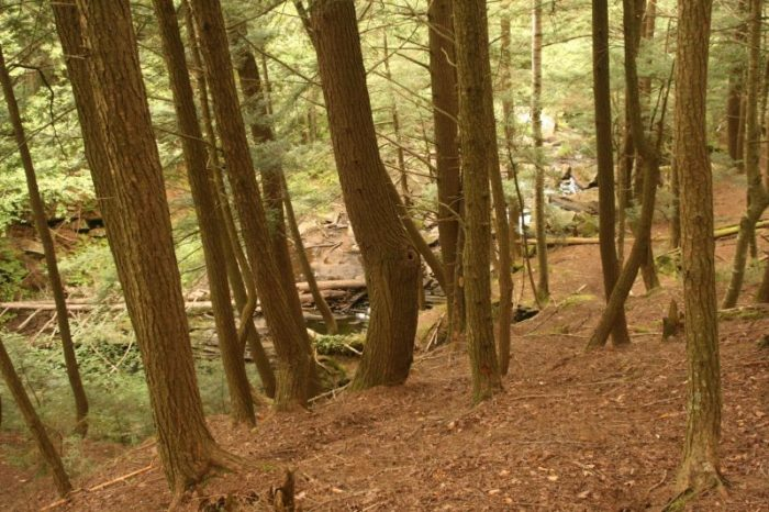 6.  Mathewson State Forest, Lyndonville