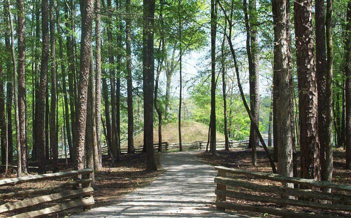 Enjoy Holly Springs National Forest.