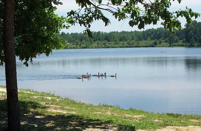 Go swimming, kayaking or canoeing at Chewalla Lake Recreation Area.