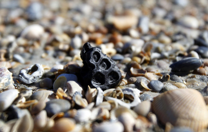 Many of our beaches are full of fossils, and it seems like there's always a new archaeological discovery.