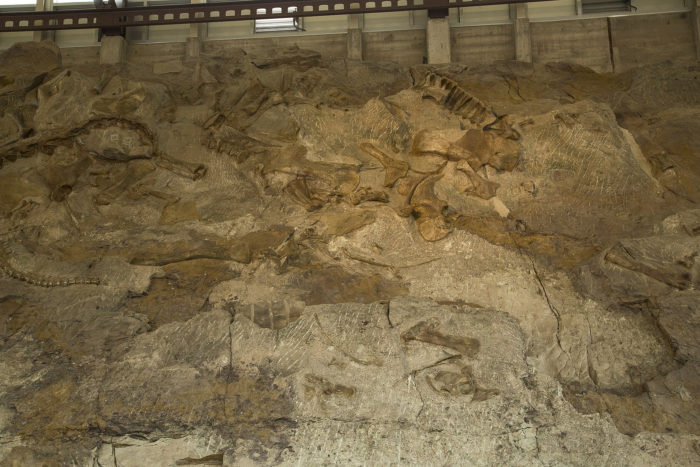 11. Paleontology, anyone? Yep, we've even got a place for that!