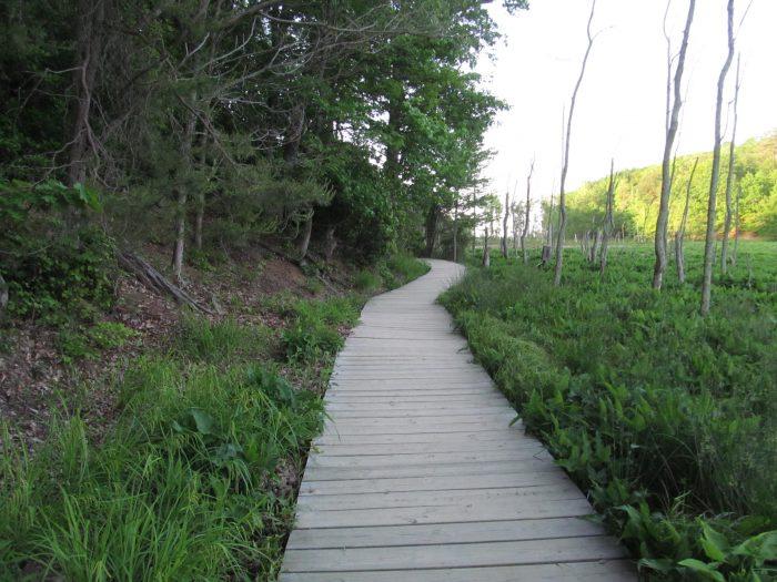 2. Calvert Cliffs State Park (Red Trail) - Lusby