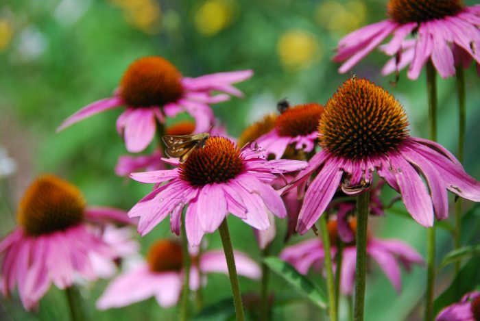 5. University of Delaware Botanic Garden