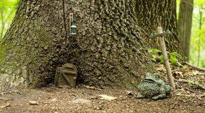 You'll Never Guess What's Hiding Deep Inside A Massachusetts Forest