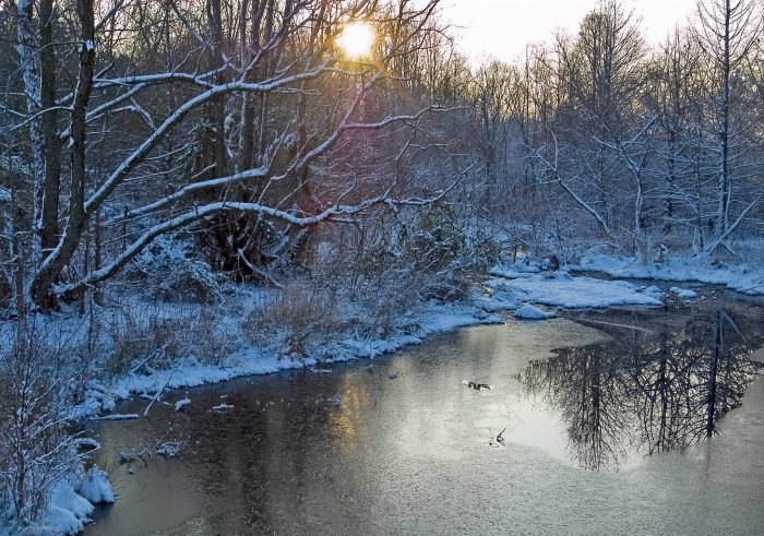 Or if you prefer the quiet and crisp atmosphere of winter, the arboretum transforms into a peaceful winter wonderland.