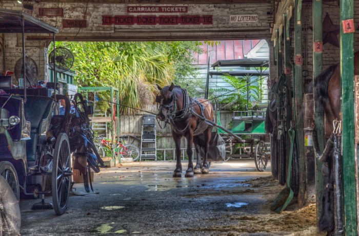 11. A workhorse returns to the carriage barn for a break on a summer morning in Charleston.