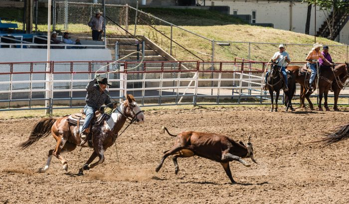 12. Watch two of the oldest rodeos in the country in Prescott and Payson.