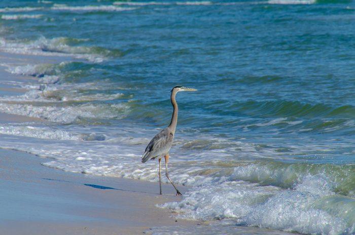 6. Bon Secour National Wildlife Refuge Beach - Gulf Shores