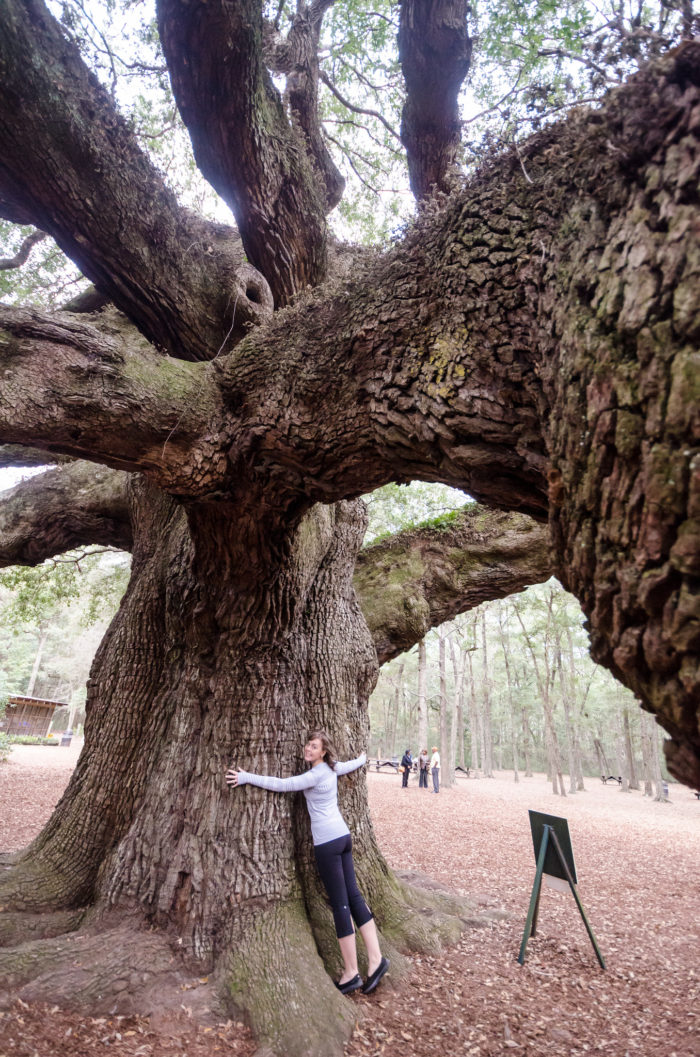 2. A gigantic marvel known as the Angel Oak Tree (Johns Island).