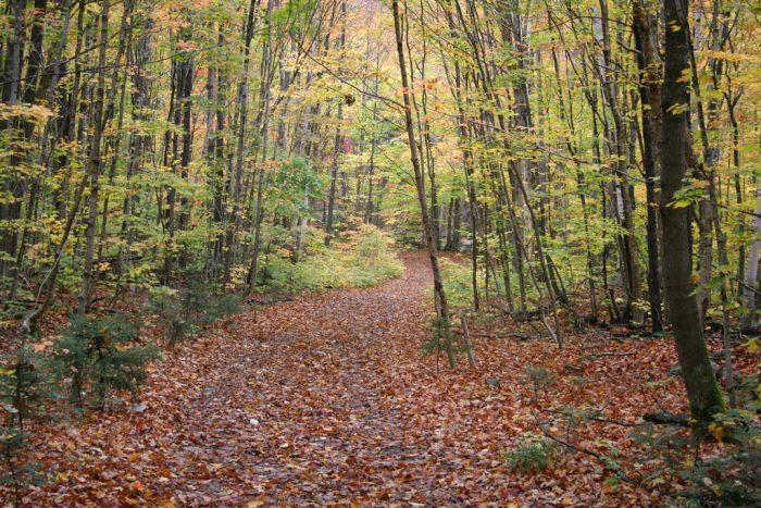 3. Angel Falls Trail, Near Byron
