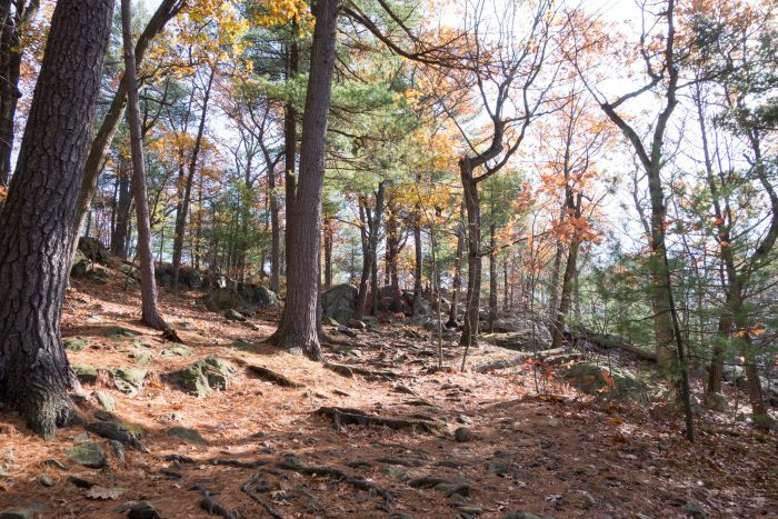 4. The Skyline Trail in Middlesex Fells Reservation is a popular route to an observation tower on Pine Hill. The trail is 6.9 miles and moderately difficult.