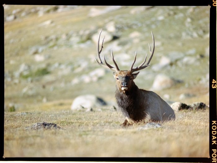 14. Colorado is home to an abundance of different animals to study (from afar).
