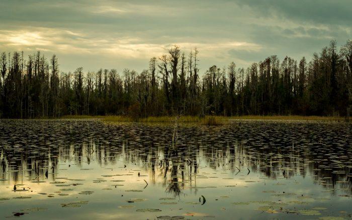 6. Explore the wildlife at Okefenokee Swamp.